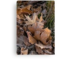 Frosty Leaves  Canvas Print
