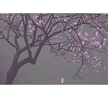 China Red - Pink Blossoms Photographic Print