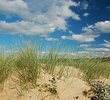 Dunes at North Norfolk beach, United Kingdom by Magdalena Warmuz-Dent