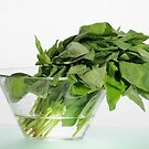 Basil Leaves by jon  daly