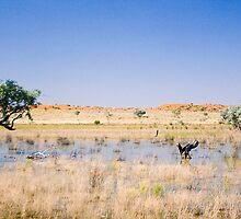 Desert Lagoon by Richard  Windeyer
