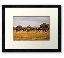 Camel Herd Framed Print