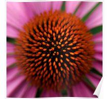 Echinacea centre Poster