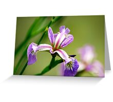 Wild Iris Flower Art Greeting Card
