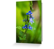 Colorful Blue Speedwell Flowers Greeting Card