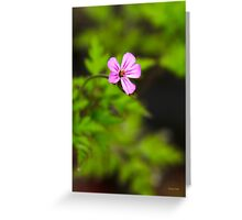 Herb Robert Pink Wildflower Art Greeting Card