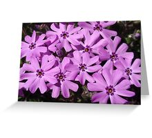 Phlox Flowers Abstract Greeting Card