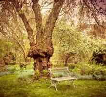 Serenity and Joy in the Garden by Monica M. Scanlan