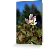 Wood Anemone Flower Greeting Card