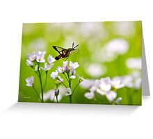 Hummingbird Clearwing Moth Greeting Card