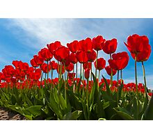 Life from the Tulip's View Photographic Print