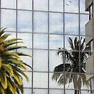 Reflected Palm by Rosalie Scanlon
