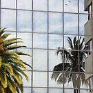 Reflected Palm by Rosalie Scanlon