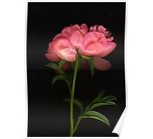 Single Coral Peony Poster