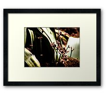 Welwitschia Plant Male Flowers Framed Print