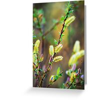 Pussy Willow Nature Abstract Art Greeting Card