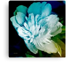 Blue Peony Flower Canvas Print