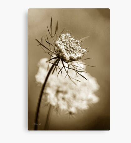 Sepia Wildflower Canvas Print