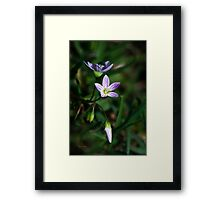 Spring Beauty Wildflowers Framed Print