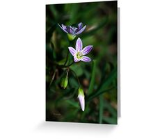 Spring Beauty Wildflowers Greeting Card