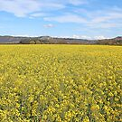 I Dream Of Yellow by Dfilmuk Photos