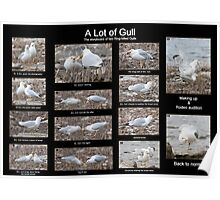 A Lot of Gull Poster