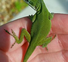 Green Anole by tinkerz