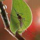 """World Malaria Day-25/04/12"" by debjyotinayak"