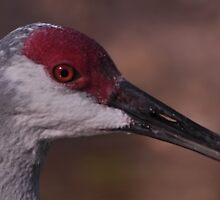 Sandhill Crane, As Is by Kim McClain Gregal