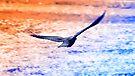 the Raven by Karl David Hill