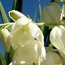 Palm lily by Irene  van Vuuren