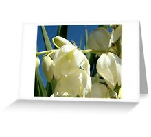 Palm lily Greeting Card