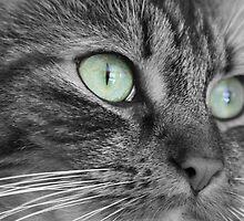 Prettiest Eyes 2 by Amy L Edwards