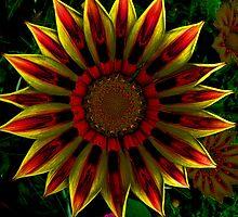 Flower Power by Robert Gipson