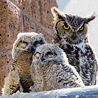 Horned Owl with Chicks by J. Michael Runyon