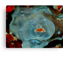 Stone or Jelly? Canvas Print