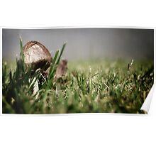 Little Mushrom Poster