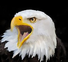 Bald Eagle by John Ryan