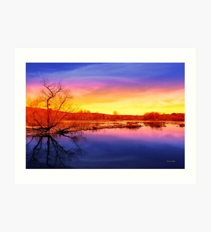 Tranquil Tree Reflection Art Print