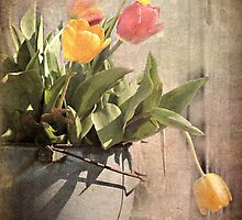 Tulips by Shelly Harris