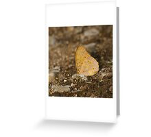 Common Leopard Greeting Card