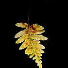 Fern on Black by John Butler