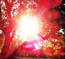 Apple Tree Sunshine Sticker