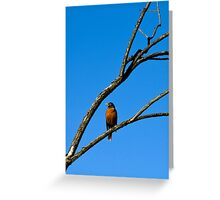 American Robin in Tree Greeting Card