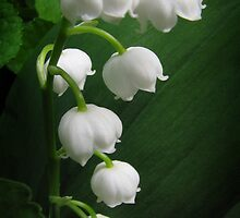 The Sound of Flowers - Lily of the Valley by Karen Casey-Smith