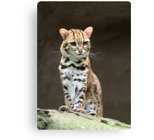 Very annoyed leopard cat Canvas Print
