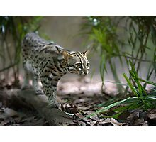 Wild cat hunting in the grass Photographic Print