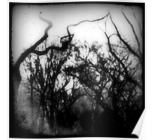 bw trees Poster