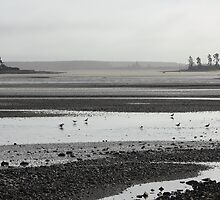 Busy-ness of mudflats by Duncan Cunningham