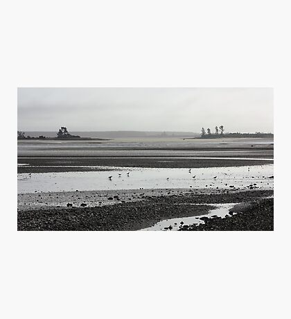Busy-ness of mudflats Photographic Print